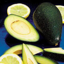 Avocado Don Gillogly