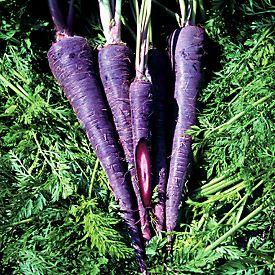 Yes... Purple