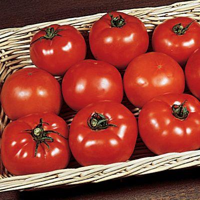 Tomato Primetime Hybrid